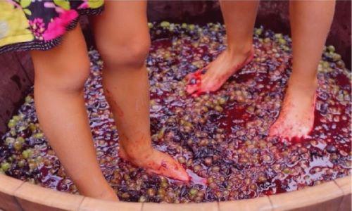 """Continuiamo a """"NAVIGARE"""" con ARCA-ENOLOGIA ==> """"Consigli per gli enohobbysti, amanti e appassionati della vitivinicoltura"""" a cura di Sergio De Angelis"""
