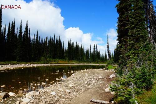 ca- Parco Nazionale di Mount Revelstoke (British Columbia)