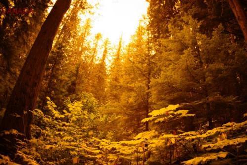 cb- Parco Nazionale di Mount Revelstoke (British Columbia)